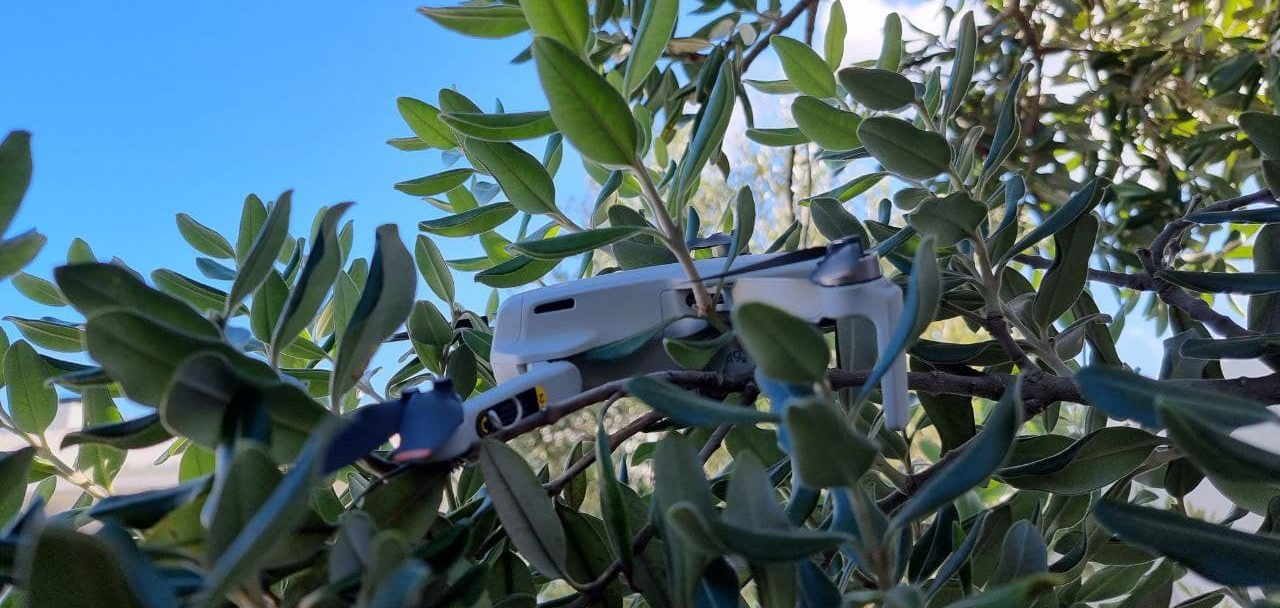drone on the tree